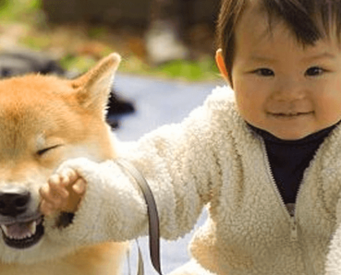 perros-seguridad-infantil